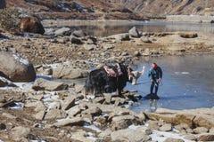 Jakken wachten tammer op het voeden van hem met water van de vijver op het gebied met stenen met berg op de achtergrond in de win Stock Foto