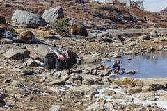 Jakken wachten tammer op het voeden van hem met water van de vijver op het gebied met stenen met berg op de achtergrond in de win Royalty-vrije Stock Afbeeldingen