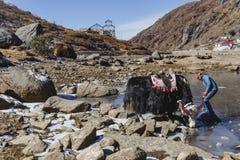 Jakken wachten tammer op het voeden van hem met water van de vijver op het gebied met stenen met berg op de achtergrond in de win Royalty-vrije Stock Afbeelding