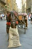 jako karecianego konia Italy taxi Zdjęcie Stock