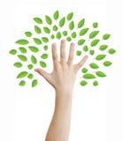 jako ręki drzewo Zdjęcia Stock