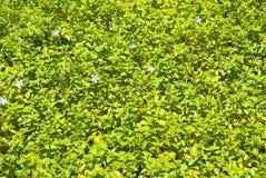 jako tła zieleni rośliny obrazy royalty free