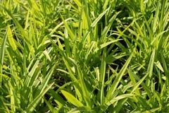 jako t?a trawy ziele? fotografia stock