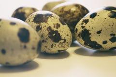 jako wiele tło jajka przepiórka Grupa przepiórki jajka odizolowywający na biały tle Zbliżenie fotografia Obrazy Stock