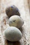 jako wiele tło jajka przepiórka Fotografia Royalty Free