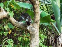 Jakt Cat Descend From Tree arkivbilder