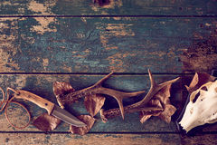 Jaktbegrepp med horn på kronhjort, kniv, skalle Arkivfoton