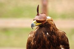 Jaktfågel Royaltyfria Foton