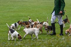 Jaktledare ledde dussintals hundar in i den huvudsakliga cirkeln arkivfoto