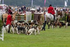 Jaktledare ledde dussintals hundar in i den huvudsakliga cirkeln royaltyfri foto