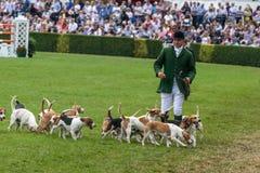 Jaktledare ledde dussintals hundar in i den huvudsakliga cirkeln arkivfoton