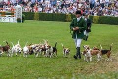 Jaktledare ledde dussintals hundar in i den huvudsakliga cirkeln arkivbilder