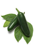 Jalapeno. Green jalapeno chili peppers with leaves on white with clipping path stock image