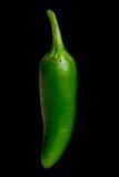 Jalapeno chili Stock Image