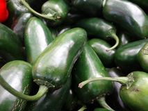 Jalapeno pepper, Capsicum annuum Royalty Free Stock Image