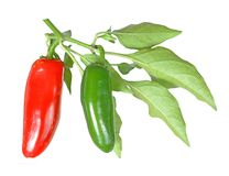 Jalapeno Pepper Royalty Free Stock Images