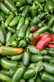 Jalapeno Peppers. A large group of pretty Jalapeno peppers stock images
