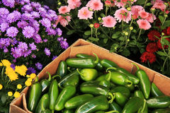Jalapeno Peppers and Flowers Royalty Free Stock Images