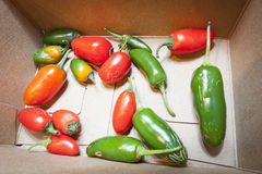 Jalapeno Peppers Stock Photography