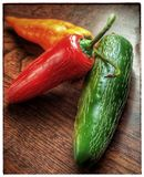 Jalapenos. Homegrown chilies Tricolor Hot Royalty Free Stock Photography