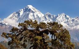 从Jaljala通行证的Panoramatic视图向道拉吉里峰Himal 库存图片