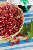 Jam-jar and red currant Stock Image