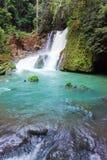 jamaïca De watervallen van de Rivier van Dunn Royalty-vrije Stock Foto