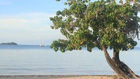 Jamaïca-Eiland Caraïbische overzees stock footage