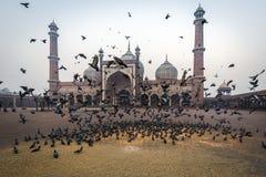 Jama Masjid,德里,印度 库存图片