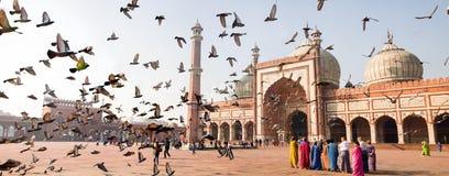 Jama Masjid (极大的清真寺) 库存图片