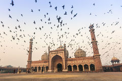 Jama Masjid, Old Delhi, India. Morning view of Jama Masjid with pigeon flying on top Royalty Free Stock Photos