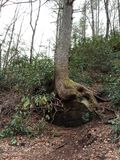 Jama pod drzewem fotografia royalty free