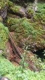 Jama w lesie obraz stock