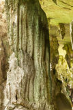 Jama w niah parku narodowym Obrazy Royalty Free