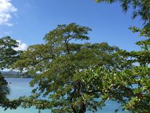 jamaica Photographie stock libre de droits