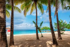 Jamaica beach in Montego Bay on Caribbean see. Beautiful palm trees on tropical beach. Summer vacation travel holiday background concept royalty free stock image