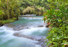 Jamaica. Dunn's River waterfalls. Landscape in a sunny day Royalty Free Stock Photos