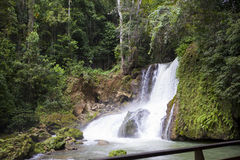 Jamaica. Dunn's River waterfalls Royalty Free Stock Photography