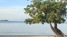 Jamaica Island. Caribbean sea. Beach in Jamaica. Caribbean sea stock footage