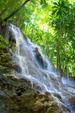 jamaica Lilla vattenfall i djungeln Arkivfoton