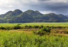 在拿骚山的一英尺的Jamaica.nature 库存图片