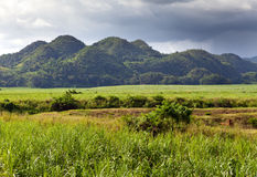 Jamaica.nature przy stopą Nassau góra Obrazy Stock