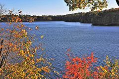 Jamaica Pond Stock Photos