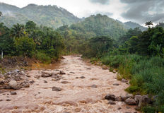 Jamaica. The river after a rain Stock Images