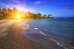jamaica Sandig kust av en fjärd och en palmträd arkivbilder