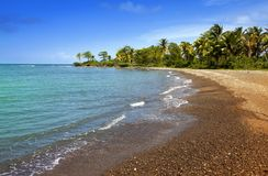 Jamaica. Sandy coast of a bay and palm tree Stock Image