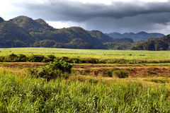 Jamaica. Tropical nature. Nassau Valley Stock Photos
