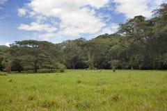 Jamaica. Tropical nature. Nassau Valley royalty free stock image