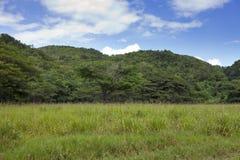 Jamaica. Tropical nature. Nassau Valley Royalty Free Stock Photos