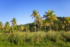 Jamaica. Tropisk natur. Liggande Royaltyfri Fotografi